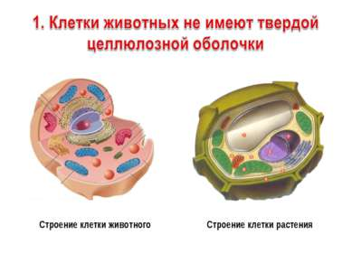 Строение клетки животного Строение клетки растения