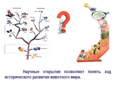 Научные открытия позволяют понять ход исторического развития животного мира.