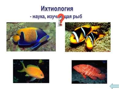 - наука, изучающая рыб