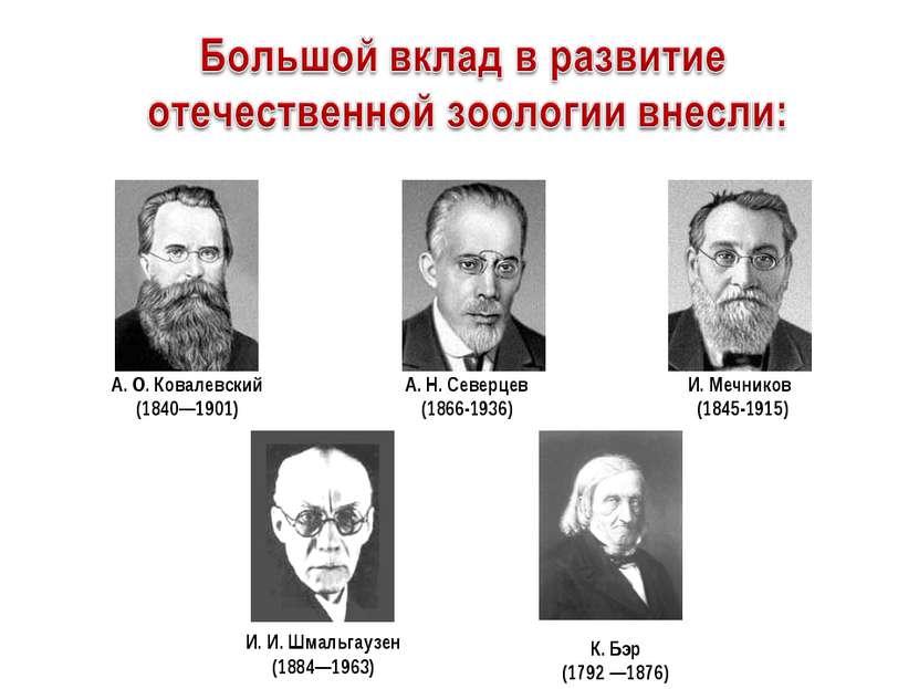 И. Мечников (1845-1915) А. О. Ковалевский (1840—1901) А. Н...