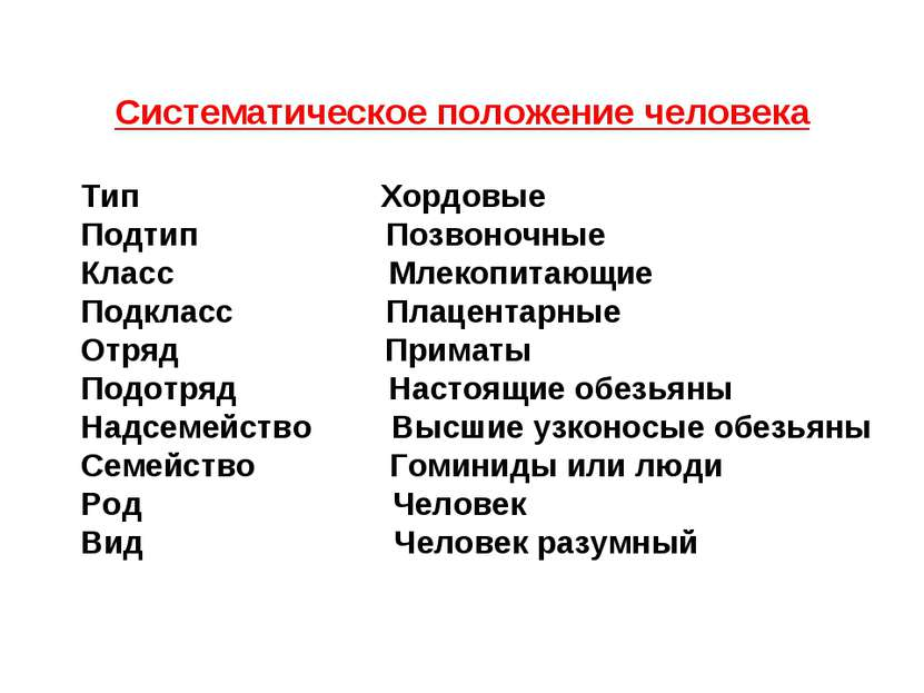 Систематическое положение человека Тип Хордовые Подтип Позвоночные Класс Млек...