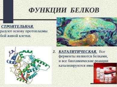 ФУНКЦИИ БЕЛКОВ СТРОИТЕЛЬНАЯ. Образуют основу протоплазмы любой живой клетки. ...