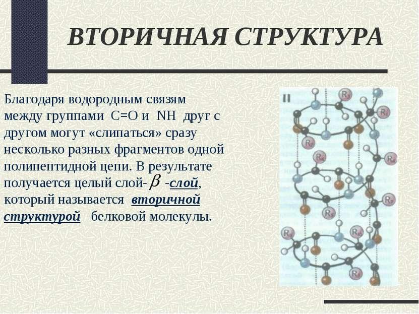 ВТОРИЧНАЯ СТРУКТУРА Благодаря водородным связям между группами С=О и NH друг ...