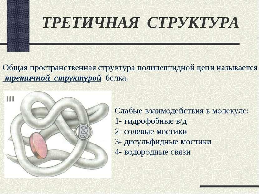 ТРЕТИЧНАЯ СТРУКТУРА Общая пространственная структура полипептидной цепи назыв...