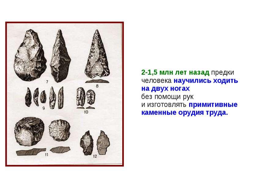 2-1,5 млн лет назад предки человека научились ходить на двух ногах без помощи...