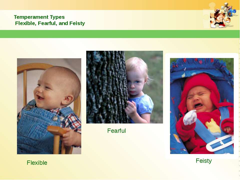 Temperament Types Flexible, Fearful, and Feisty Flexible Fearful Feisty