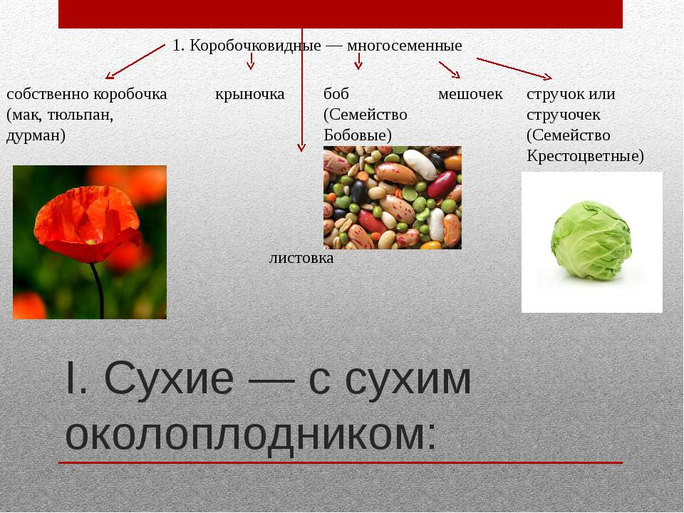 I. Сухие — с сухим околоплодником: 1. Коробочковидные — многосеменные собстве...