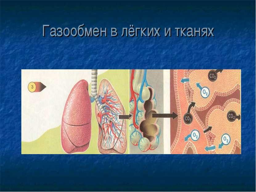 Газообмен в лёгких и тканях