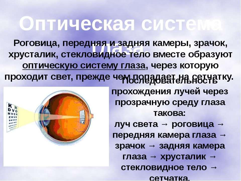 Оптическая система глаза. Роговица, передняя и задняя камеры, зрачок, хрустал...