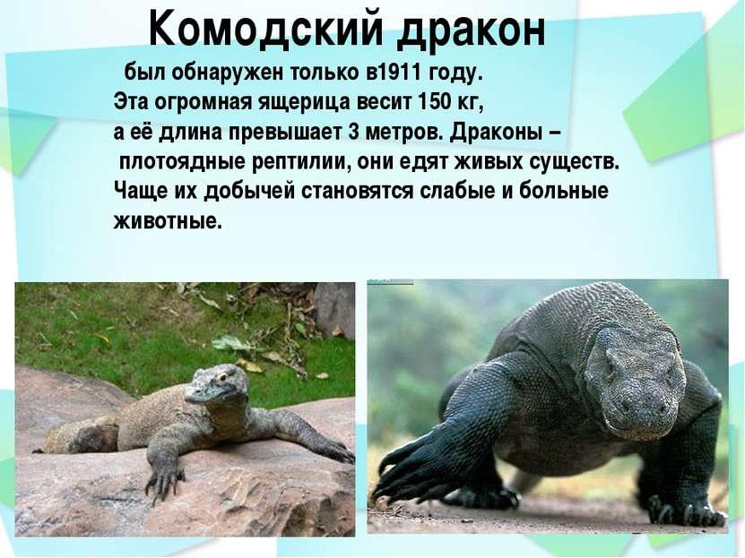 Комодский дракон был обнаружен только в1911 году. Эта огромная ящерица весит ...