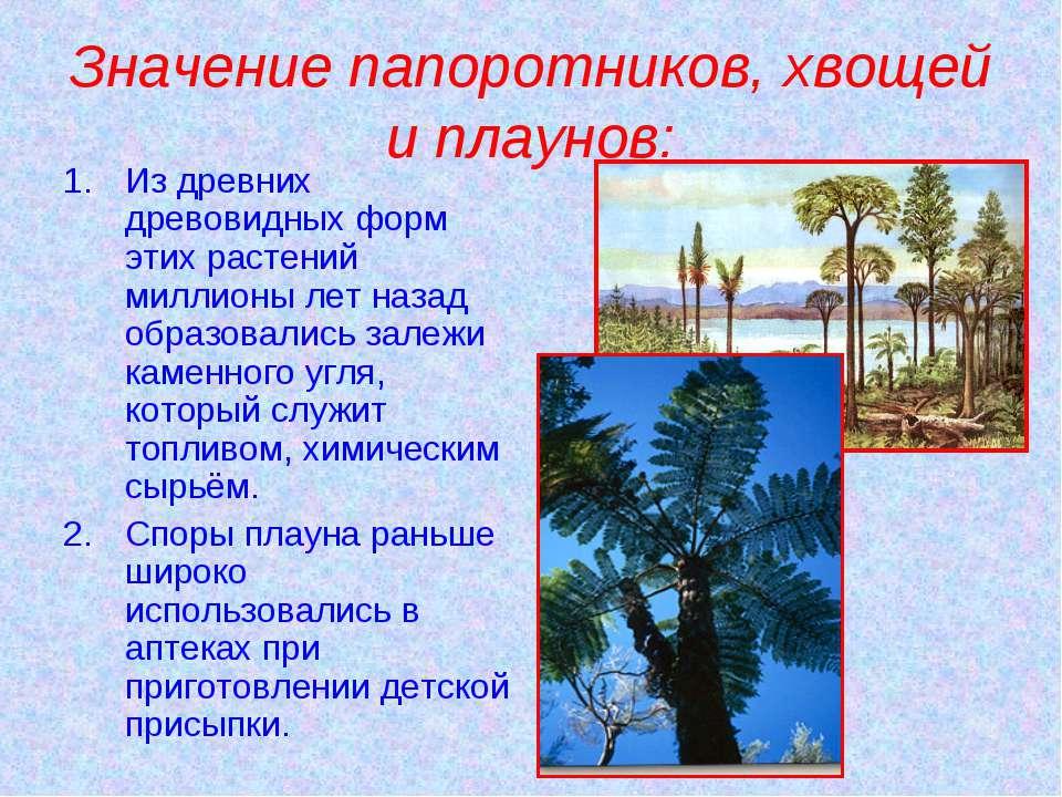 Значение папоротников, хвощей и плаунов: Из древних древовидных форм этих рас...