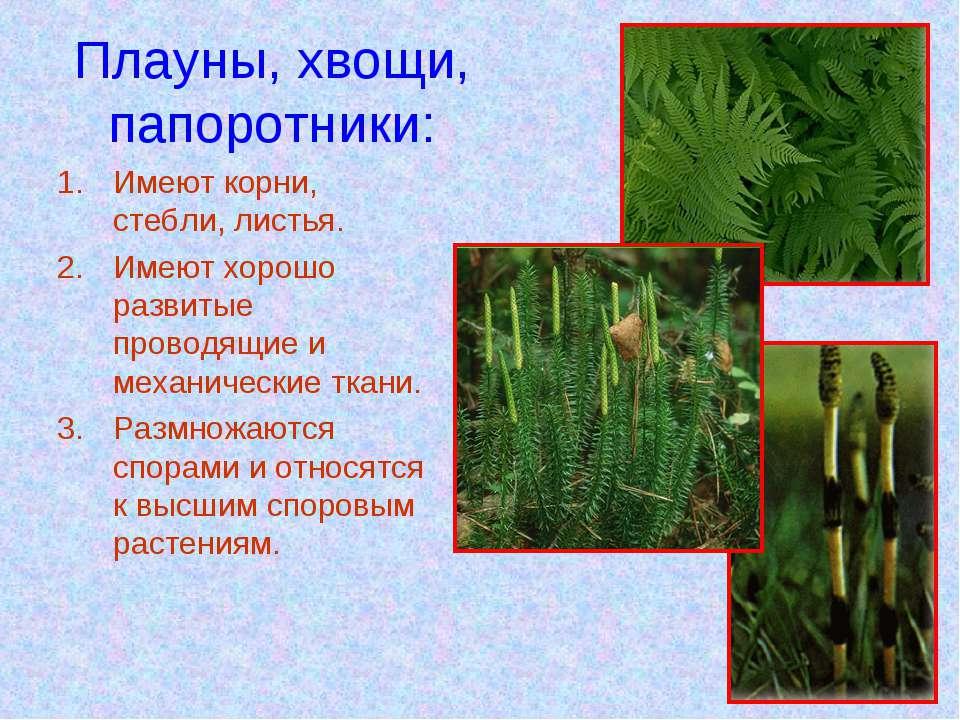 Плауны, хвощи, папоротники: Имеют корни, стебли, листья. Имеют хорошо развиты...