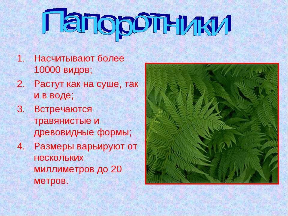 Насчитывают более 10000 видов; Растут как на суше, так и в воде; Встречаются ...