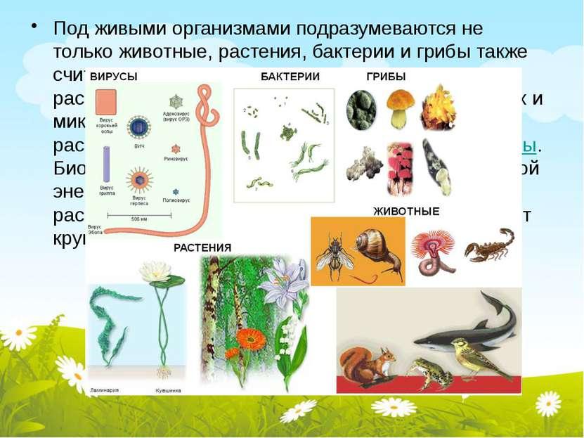 Под живыми организмами подразумеваются не только животные, растения, бактерии...
