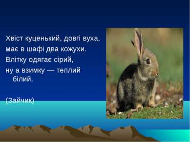 Хвіст куценький, довгі вуха, має в шафі два кожухи. Влітку одягає сірий, ну а...