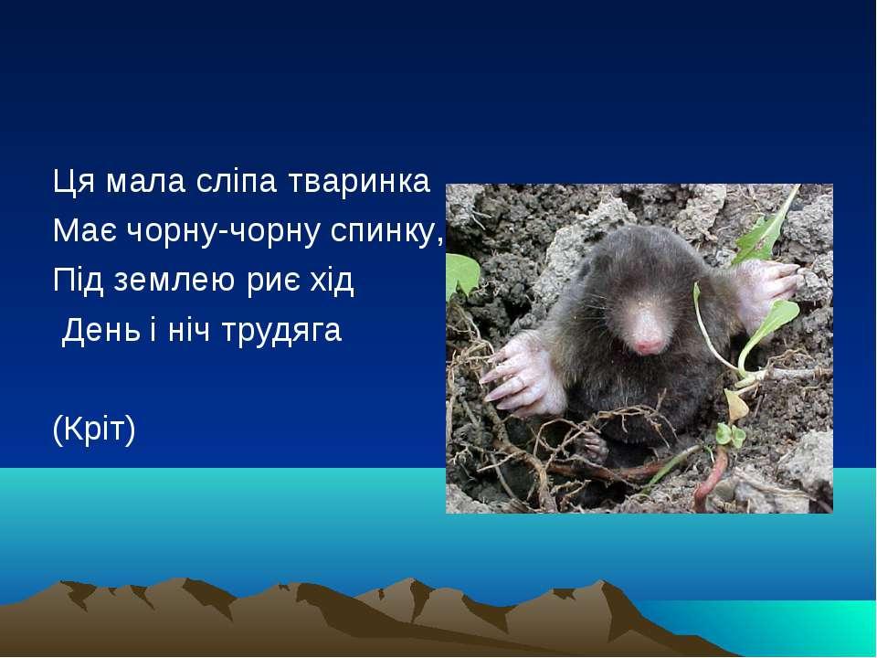 Ця мала сліпа тваринка Має чорну-чорну спинку, Під землею риє хід День і ніч ...