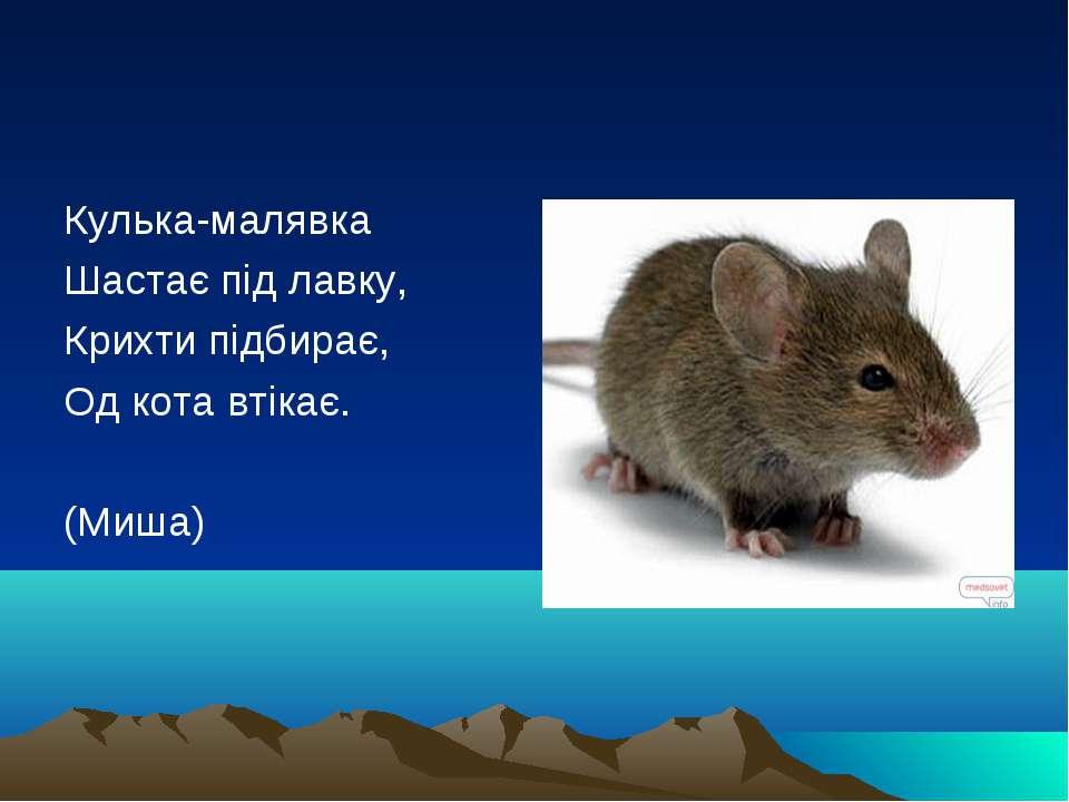 Кулька-малявка Шастає під лавку, Крихти підбирає, Од кота втікає. (Миша)