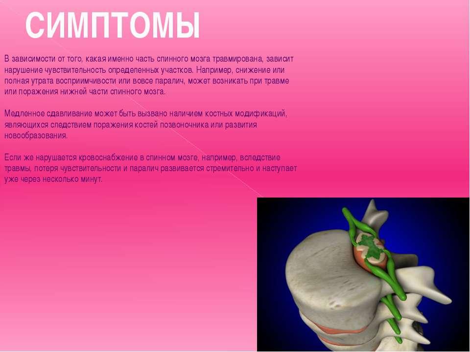 Математики из России помогут вылечить поврежденный спинной мозг
