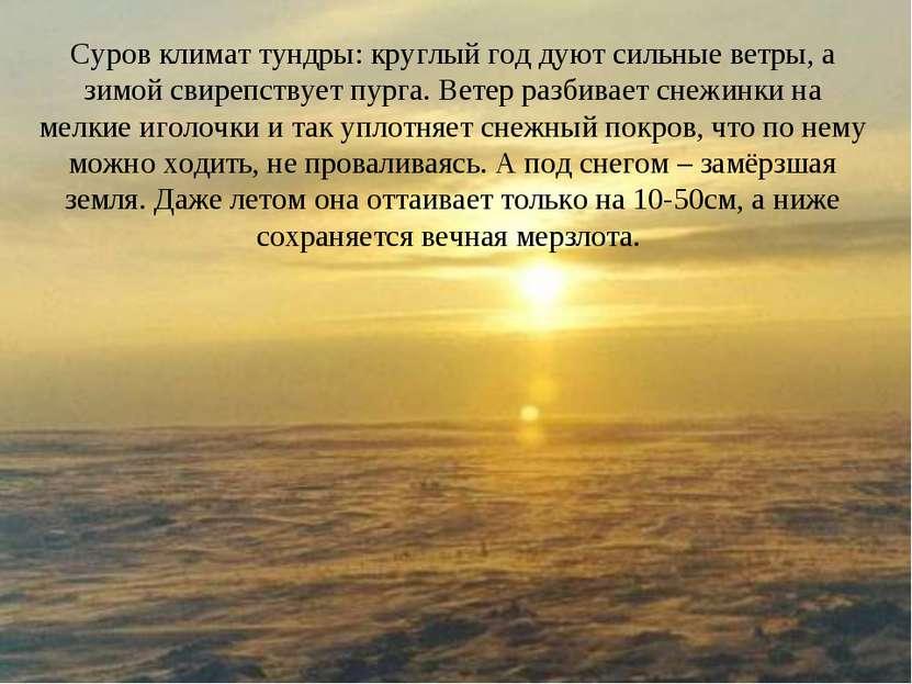 Суров климат тундры: круглый год дуют сильные ветры, а зимой свирепствует пур...
