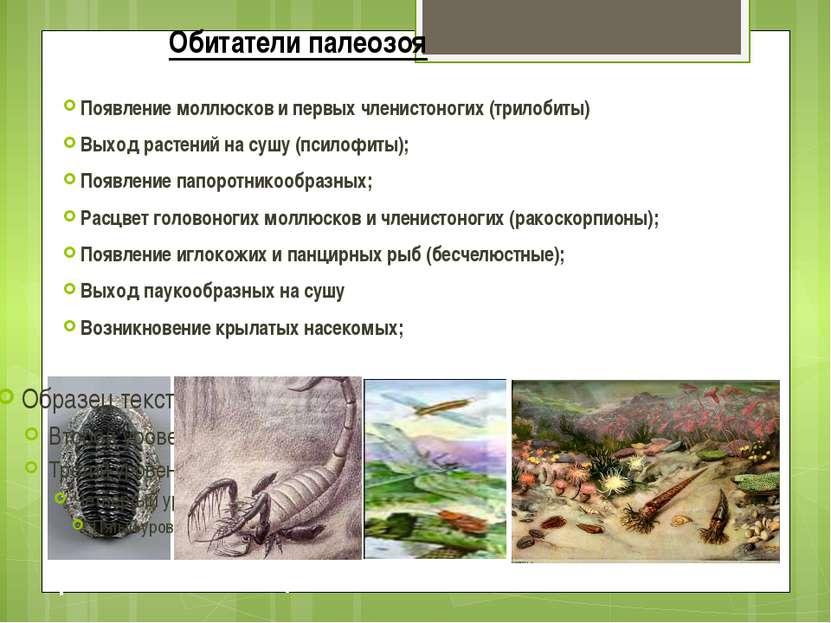 Обитатели палеозоя Появление моллюсков и первых членистоногих (трилобиты) Вых...