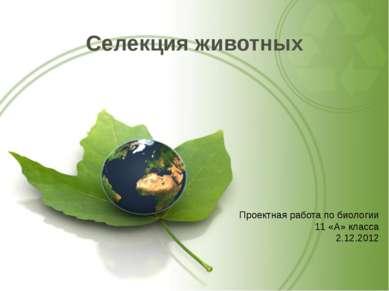 Селекция животных Проектная работа по биологии 11 «А» класса 2.12.2012