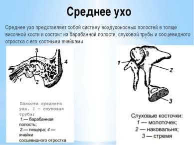 Среднее ухо Среднее ухо представляет собой систему воздухоносных полостей в т...