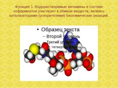 Функция 1. Водорастворимые витамины в составе коферментов участвуют в обмене ...