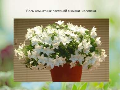 Роль комнатных растений в жизни человека.