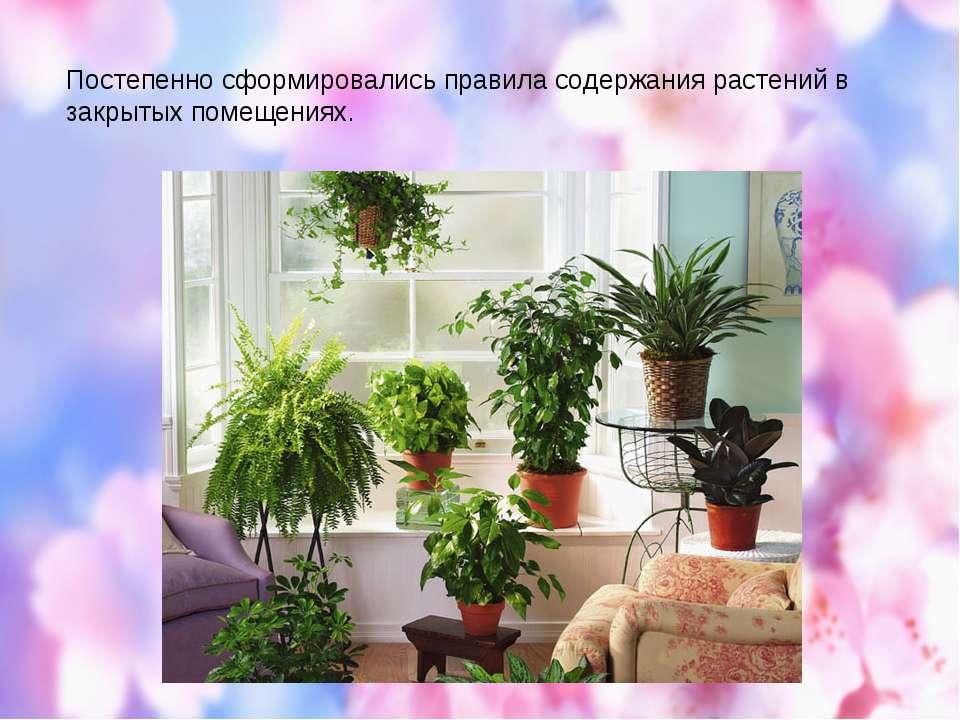 Постепенно сформировались правила содержания растений в закрытых помещениях.