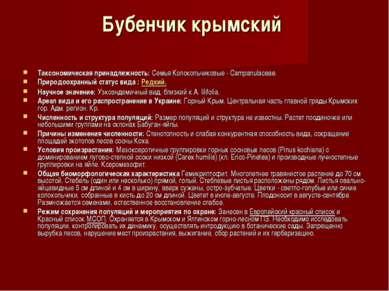 Бубенчик крымский Таксономическая принадлежность:Семья Колокольчиковые - Ca...