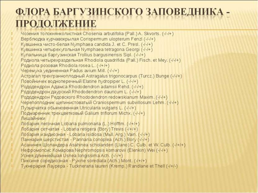 Чозения толокнянколистная Chosenia arbutifolia (Pall.) A. Skvorts. (-/-/+) Ве...