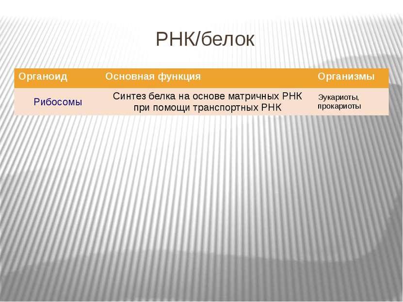РНК/белок Органоид Основная функция Организмы Рибосомы Синтез белка наосновем...