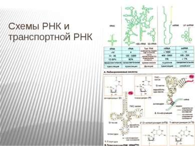 Схемы РНК и транспортной РНК