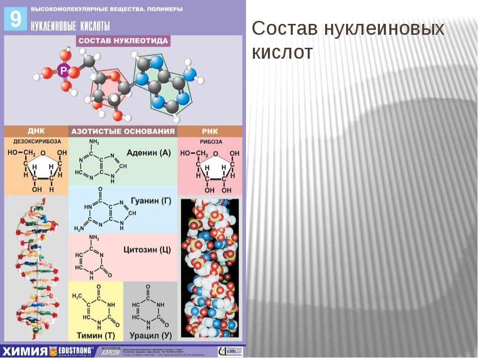 Состав нуклеиновых кислот