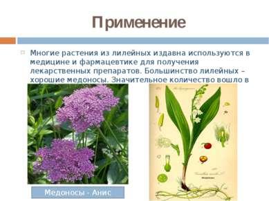 Применение Многие растения из лилейных издавна используются в медицине и фарм...