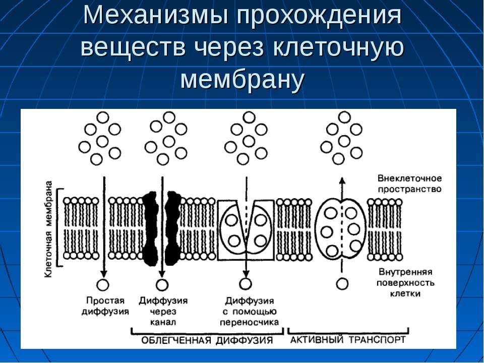 Механизмы прохождения веществ через клеточную мембрану