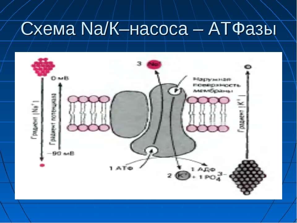Схема Na/К–насоса – АТФазы