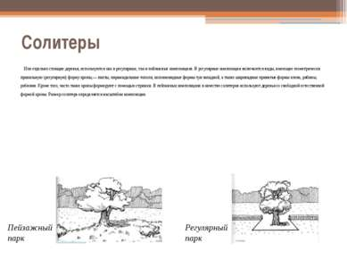 Солитеры Или отдельно стоящие деревья, используются как в регулярных, так и п...