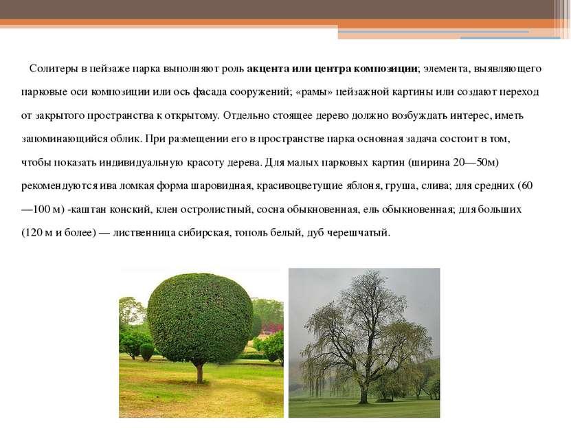 Солитеры в пейзаже парка выполняют роль акцента или центра композиции; элемен...
