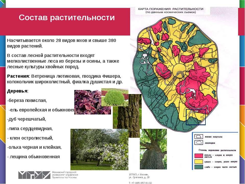 Насчитывается около 28 видов мхов и свыше 380 видов растений. В состав лесной...