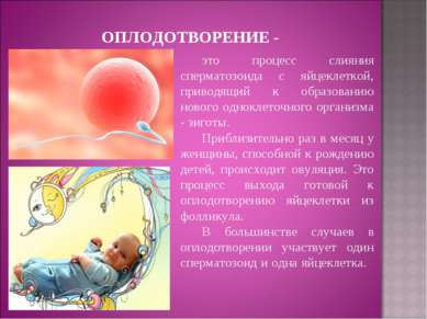 ОПЛОДОТВОРЕНИЕ - это процесс слияния сперматозоида с яйцеклеткой, приводящий ...
