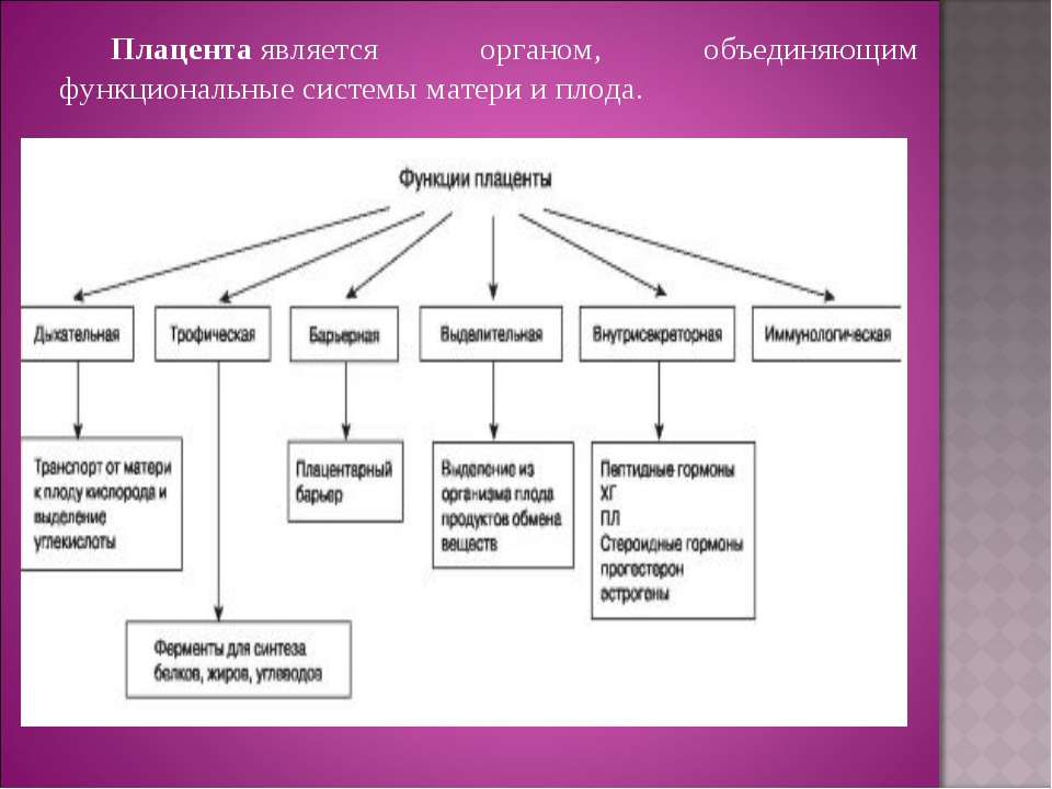 Плацентаявляется органом, объединяющим функциональные системы матери и плода.