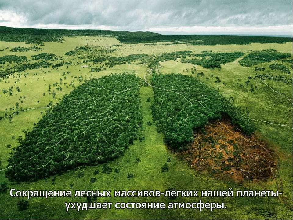 в экологии скачать: