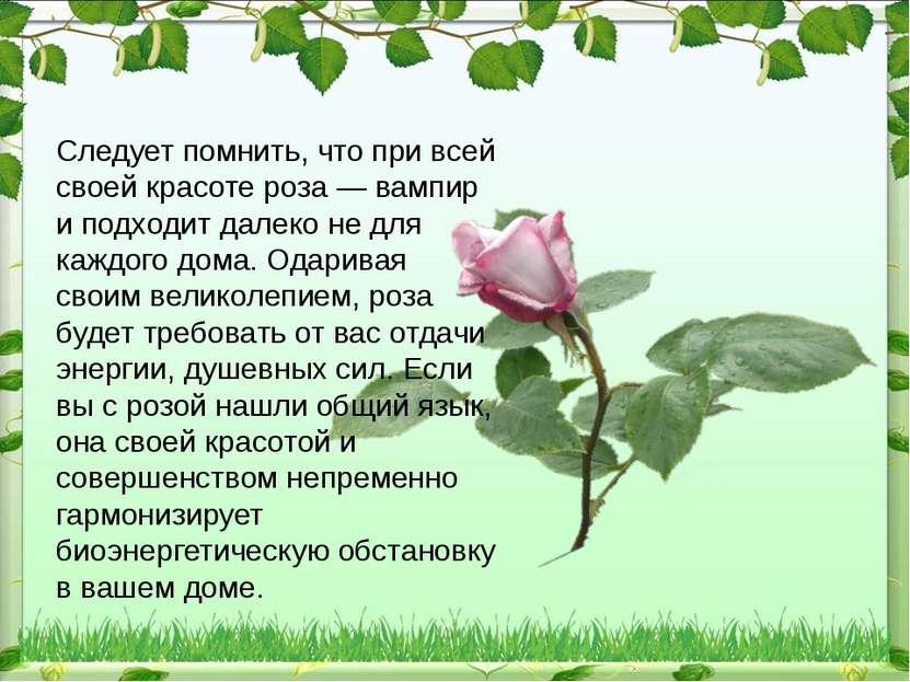Следует помнить, что при всей своей красоте роза — вампир и подходит далеко н...