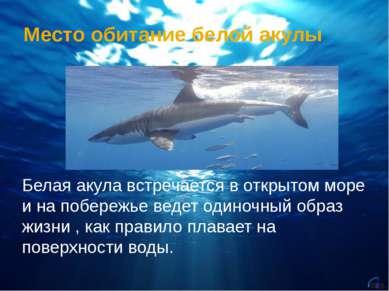 Место обитание белой акулы Белая акула встречается в открытом море и на побер...