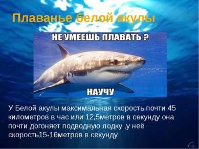 Плаванье белой акулы У Белой акулы максимальная скорость почти 45 километров ...