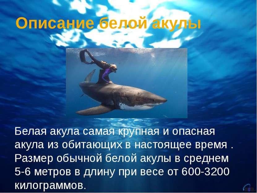 Описание белой акулы Белая акула самая крупная и опасная акула из обитающих в...