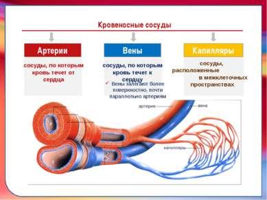 Клапан —, образованная складками его внутренней оболочки, обеспечивает однона...