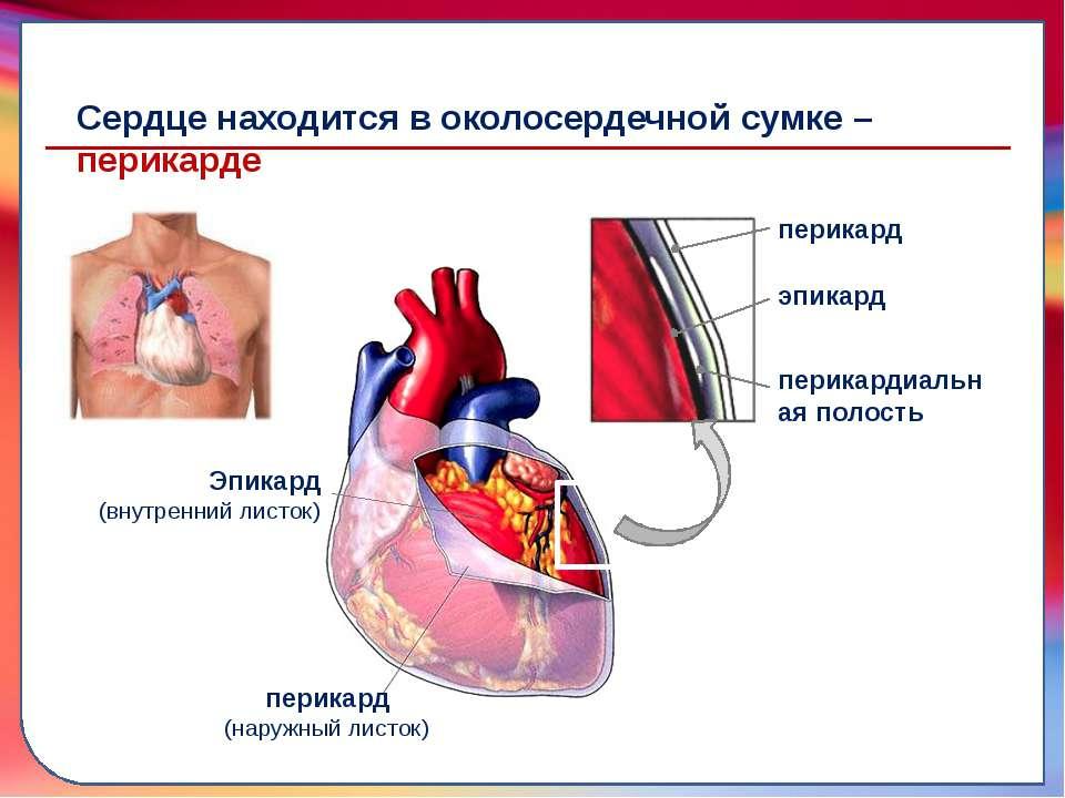 транспортировку питательных веществ, газов, гормонов и продуктов метаболизма ...