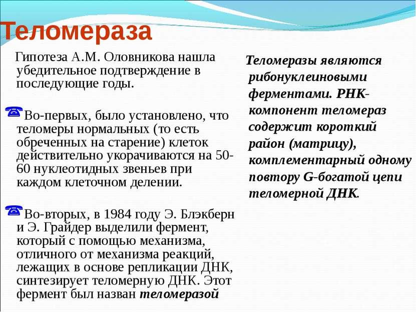 Теломераза Гипотеза А.М. Оловникова нашла убедительное подтверждение в послед...